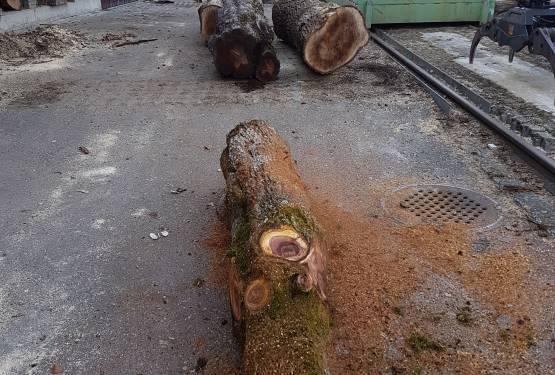 25.02.2019  Birnbaum liegt bereit zur Verarbeitung